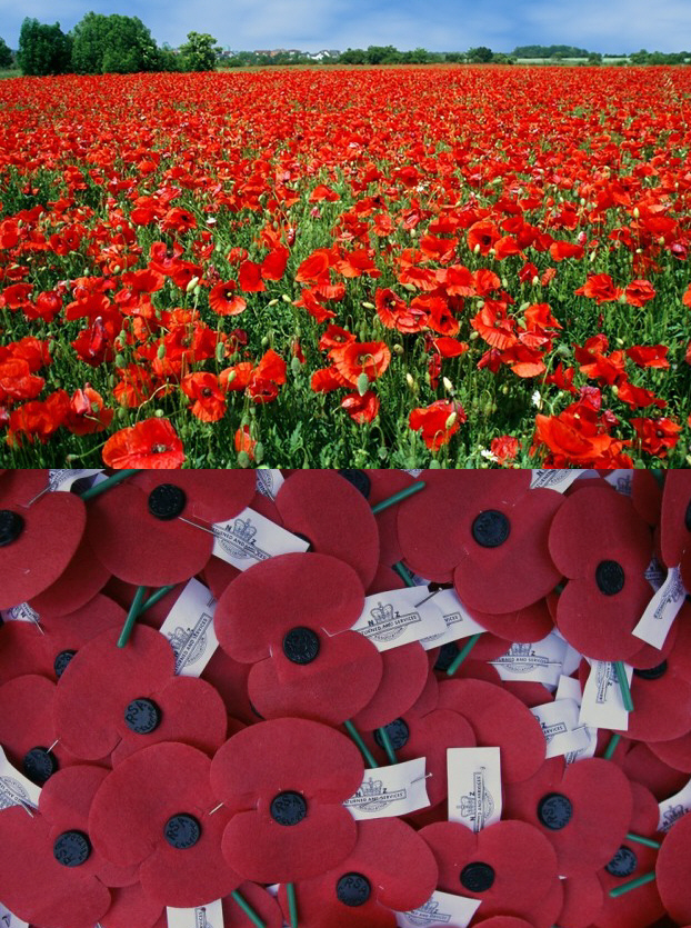 Roads To The Great War The Red Poppy Symbol Of The Great War